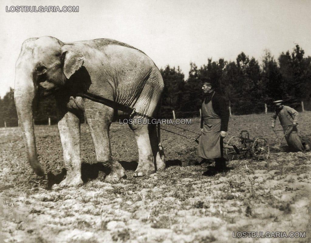The elephant at Vrana estate